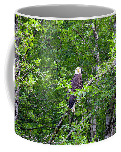 Eagle Coffee Mug featuring the photograph Eagle Watch by Anthony Jones