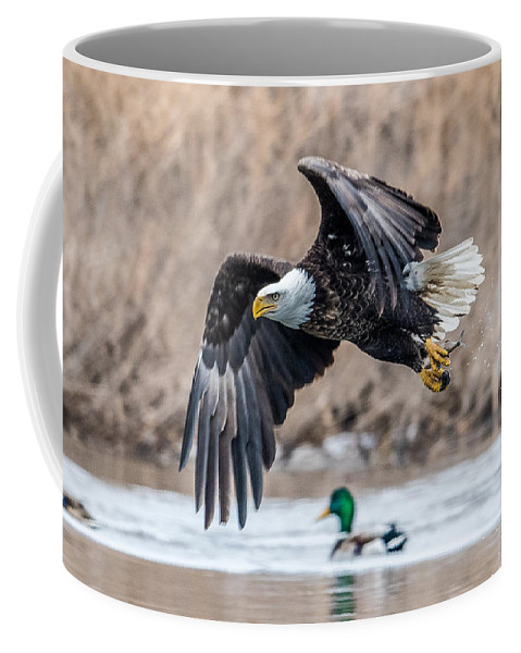 Bald Eagle Coffee Mug featuring the photograph Eagle With Lunch by Paul Freidlund