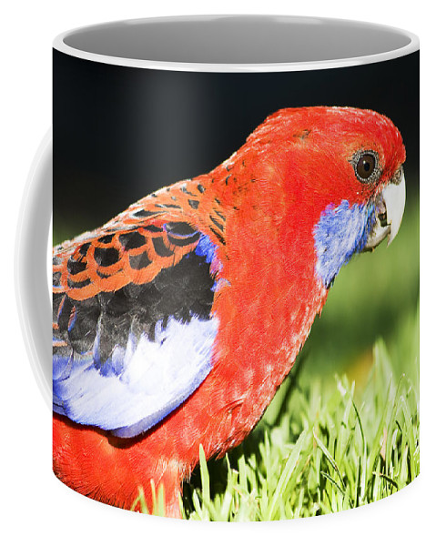 Parrot Coffee Mug featuring the photograph Early Bird by Jorgo Photography - Wall Art Gallery