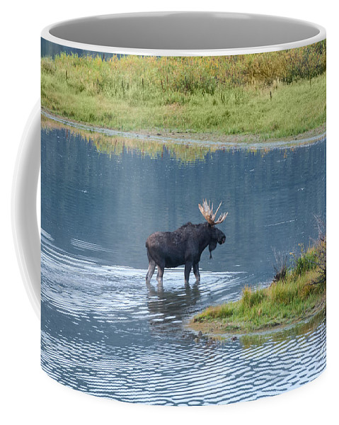 Grand Teton National Park Coffee Mug featuring the photograph Early Morning Crossing In Grand Teton by Sandra Bronstein