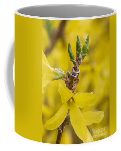 Yellow Coffee Mug featuring the photograph Early Spring by Arlene Carmel