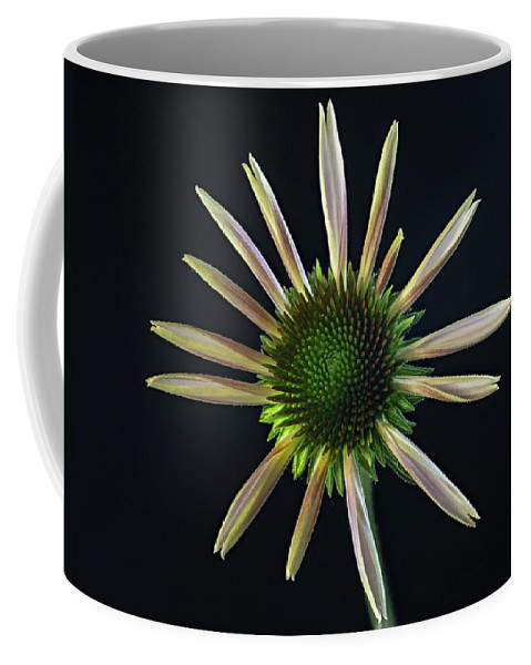 Cone Coffee Mug featuring the photograph Early Stage Of Cone Flower Bloom by Douglas Barnett