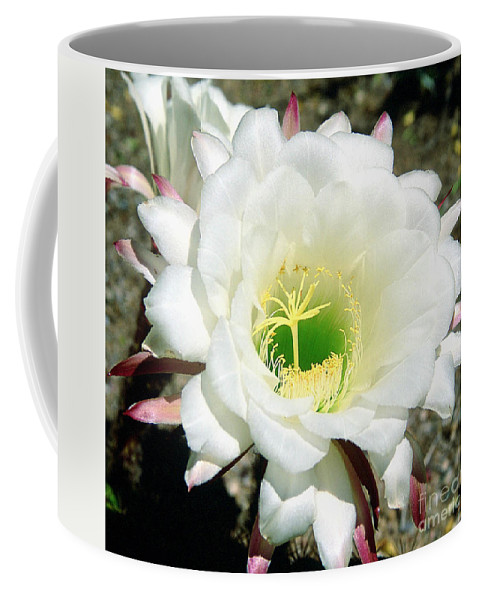Wildflowers Coffee Mug featuring the photograph Easter Lily Cactus Flower by Kathy McClure