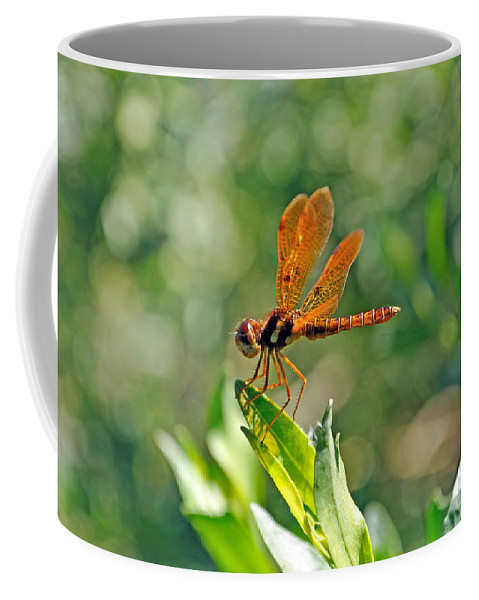 Dragonfly Coffee Mug featuring the photograph Eastern Amber Wing Dragonfly by Kenneth Albin