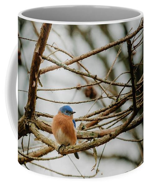 Bluebird Coffee Mug featuring the photograph Eastern Bluebird by Steven Jones