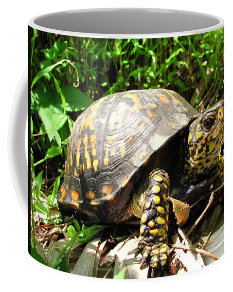 Maryland Eastern Box Turtle Images Terrestrial Turtle Images Box Turtle Photo Prints Biodiversity Forest Ecology Nature Reptile Prints Coffee Mug featuring the photograph Eastern Box Turtle by Joshua Bales