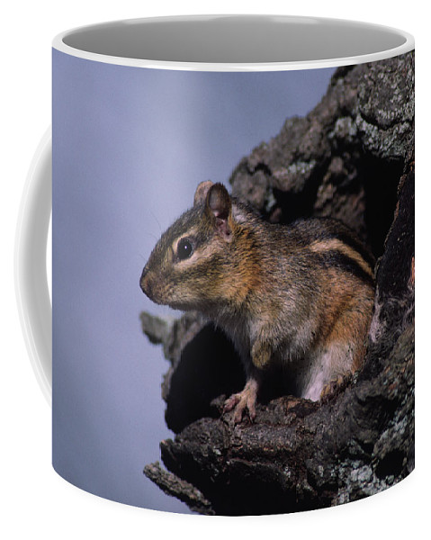 Tree Cavity Coffee Mug featuring the photograph Eastern Chipmunk In Tree by Mark Wallner
