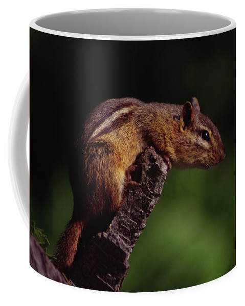 Native Coffee Mug featuring the photograph Eastern Chipmunk On Stump by Mark Wallner