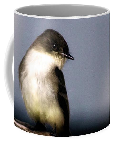 Bird Coffee Mug featuring the photograph Eastern Phoebe by Lana Trussell