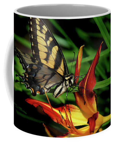 Swallow Tail Coffee Mug featuring the photograph Eastern Tiger Swallow Tail Butterfly by Skip Willits