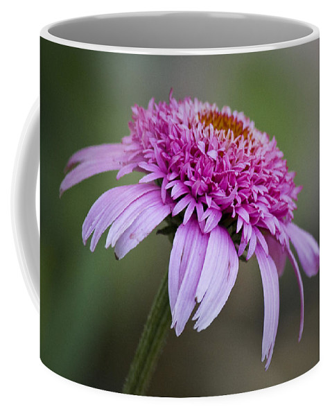 Pink Coffee Mug featuring the photograph Echinacea Pink Double Delight by Teresa Mucha