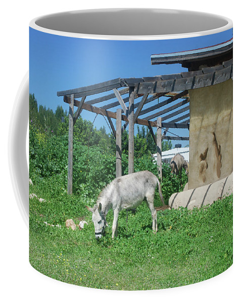 Tranquil Coffee Mug featuring the photograph Ecological Farm by Yotam Jacobson