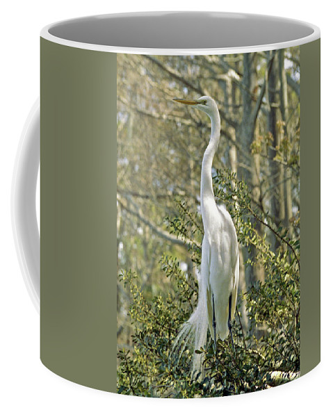 Egret Coffee Mug featuring the photograph Egret 1 by Michael Peychich