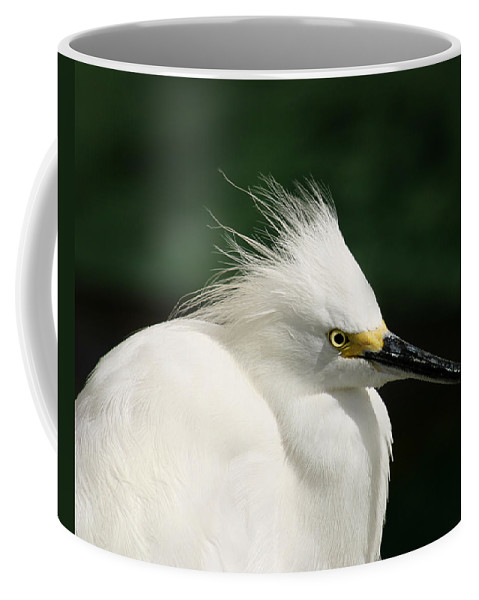 Egret Coffee Mug featuring the photograph Egret by Anthony Jones