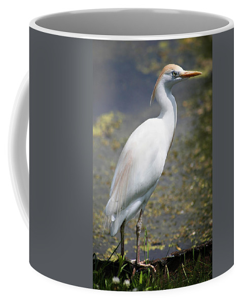Crane Coffee Mug featuring the photograph Egret Or Crane by Marilyn Hunt