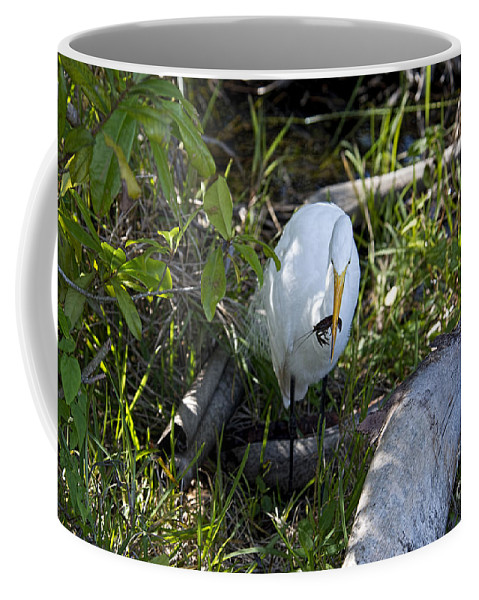 Crayfish Coffee Mug featuring the photograph Egret With Crayfish by David Arment