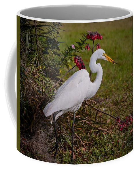 Egret Coffee Mug featuring the photograph Egret's Meal by Zina Stromberg