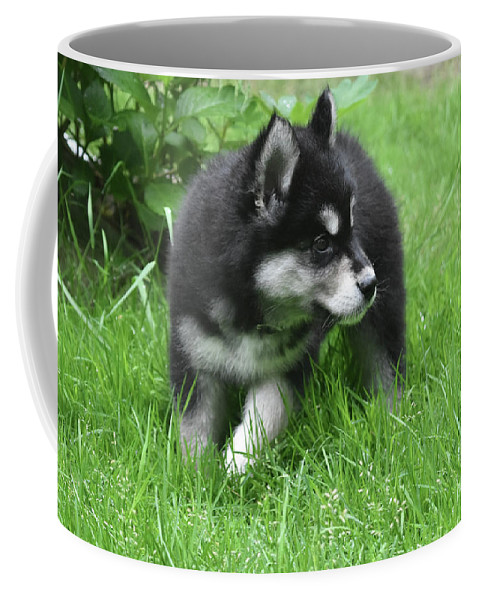 Alusky Coffee Mug featuring the photograph Eight Week Old Alusky Puppy On A Summer Day by DejaVu Designs