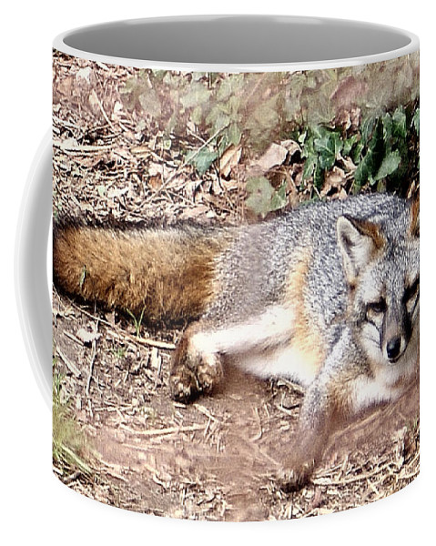 Fox Coffee Mug featuring the photograph El Zorro by Jean Haynes