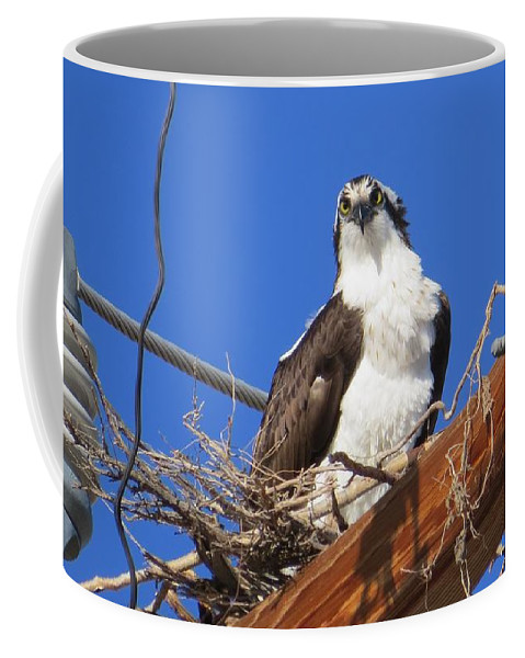 Osprey Coffee Mug featuring the photograph Electric Blue Osprey by Christi Chapman