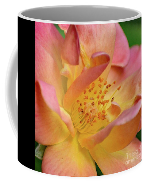 Rosa Coffee Mug featuring the photograph Elegant Joseph's Coat Of Many Colors Rose by Cindy Treger