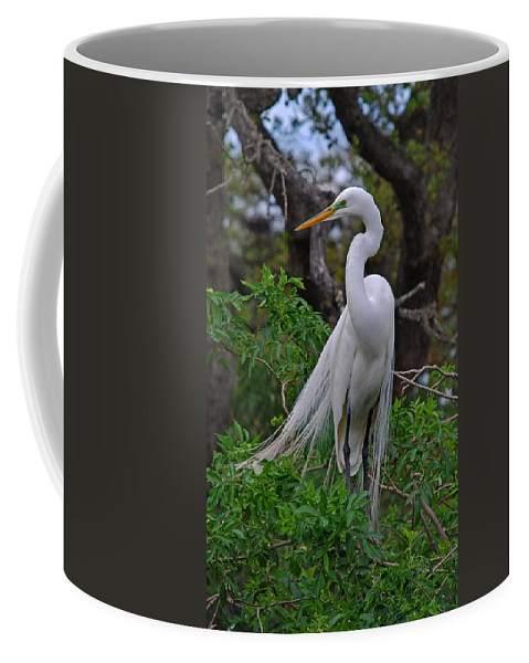 Names Of Birds Coffee Mug featuring the photograph Elegantly Alert by Skip Willits