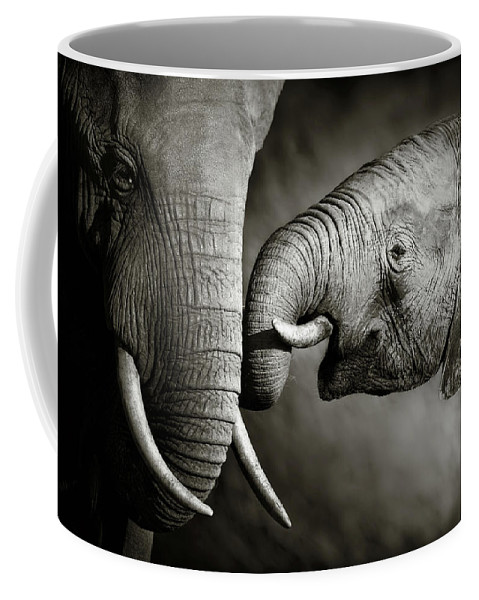 Elephant; Interact; Touch; Gently; Trunk; Young; Large; Small; Big; Tusk; Together; Togetherness; Passionate; Affectionate; Behavior; Art; Artistic; Black; White; B&w; Monochrome; Image; African; Animal; Wildlife; Wild; Mammal; Animal; Two; Moody; Outdoor; Nature; Africa; Nobody; Photograph; Addo; National; Park; Loxodonta; Africana; Muddy; Caring; Passion; Affection; Show; Display; Reach Coffee Mug featuring the photograph Elephant affection by Johan Swanepoel
