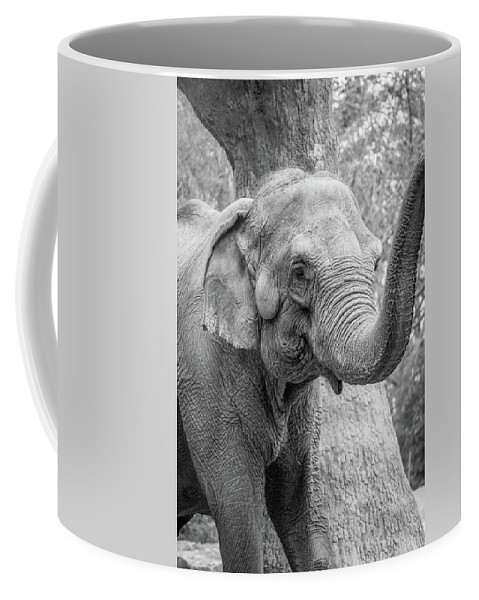 Elephant Coffee Mug featuring the photograph Elephant And Tree Trunk Black And White by Steven Jones