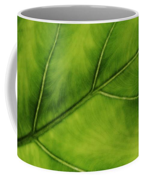 Leaf Coffee Mug featuring the photograph Elephant Ear by Marilyn Hunt