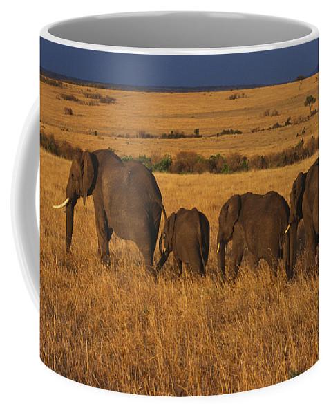 Elephants Coffee Mug featuring the photograph Elephant Family - Sunset Stroll by Sandra Bronstein