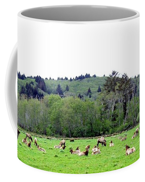 Elk Coffee Mug featuring the photograph Elk Herd by Will Borden