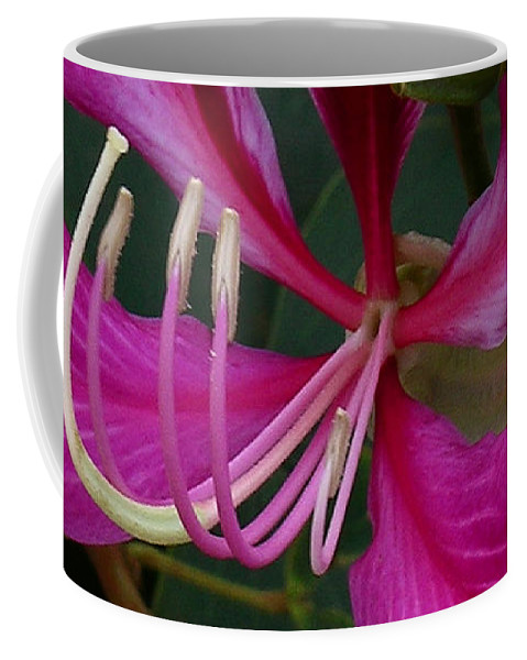 Hong Kong Orchid Tree Coffee Mug featuring the photograph Embrace by James Temple