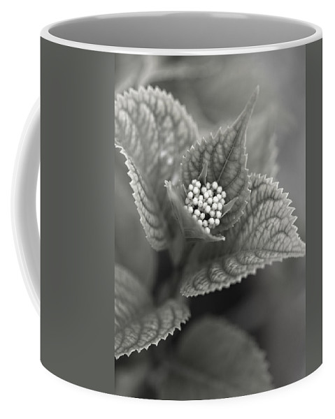 Flower Coffee Mug featuring the photograph Emerging Hydrangea by Marilyn Hunt