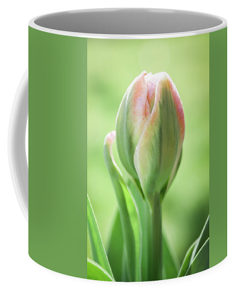Tulips Coffee Mug featuring the photograph Emerging Ice Cream Tulip by Julie Craig