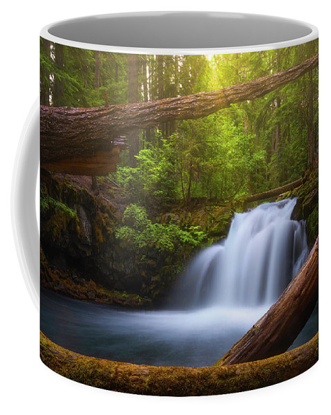 Sunlight Coffee Mug featuring the photograph Enchanted Forest by Darren White