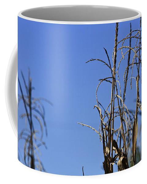 Corn Coffee Mug featuring the photograph End Of Season by Teresa Mucha