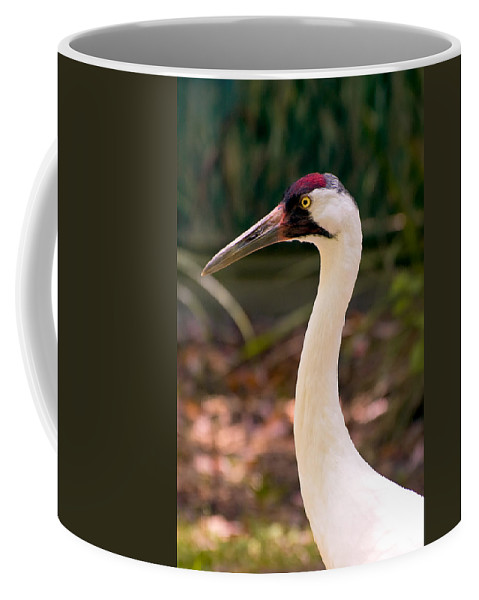 Crane Coffee Mug featuring the photograph Endangered Species - Whooping Crane by Rich Leighton