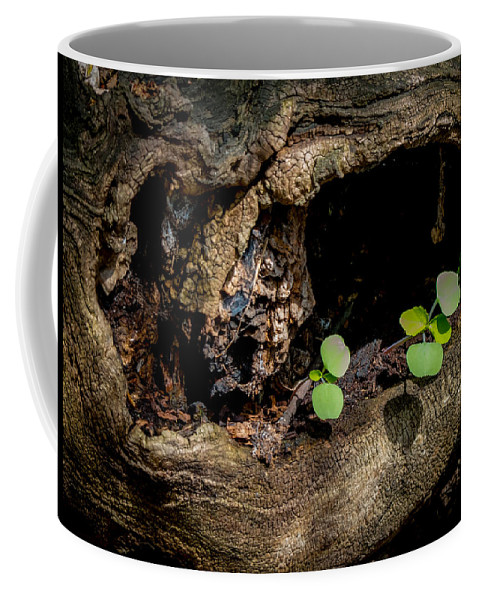 Wood Coffee Mug featuring the photograph Ends Become Beginnings by Richard Chasin