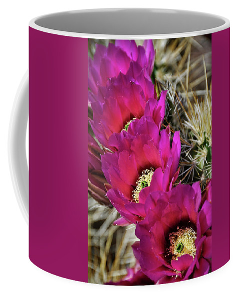 Arizona Coffee Mug featuring the photograph Engleman's Hedgehog Cactus by Saija Lehtonen