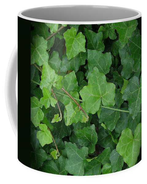 Ivy Coffee Mug featuring the photograph English Ivy by Ann Horn