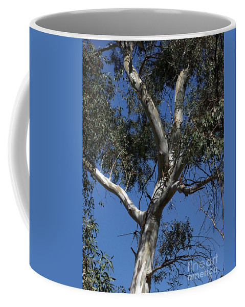 Trees Coffee Mug featuring the photograph Eucalyptus by Kathy McClure