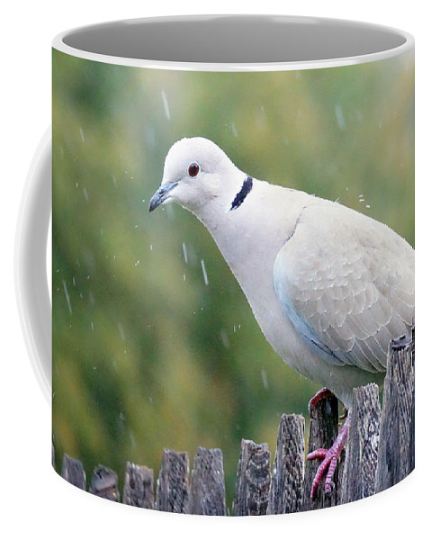 Dove Coffee Mug featuring the photograph Eurasian Collared Dove in the Rain by David G Paul