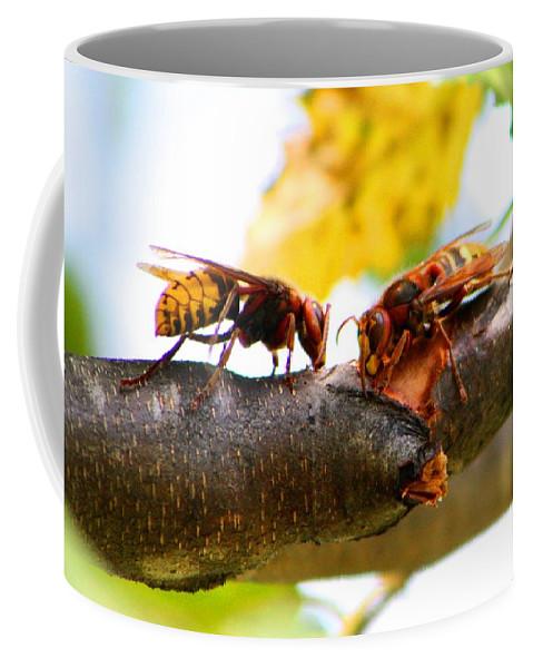 Hornet Coffee Mug featuring the photograph European Hornets by Kathryn Meyer