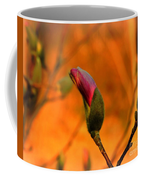 Magnolia Breaking Bud Coffee Mug featuring the photograph Evening Kiss by Tami Quigley
