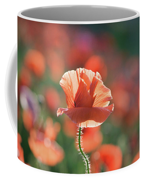Lisa Knechtel Coffee Mug featuring the photograph Evening Sun Illumination by Lisa Knechtel