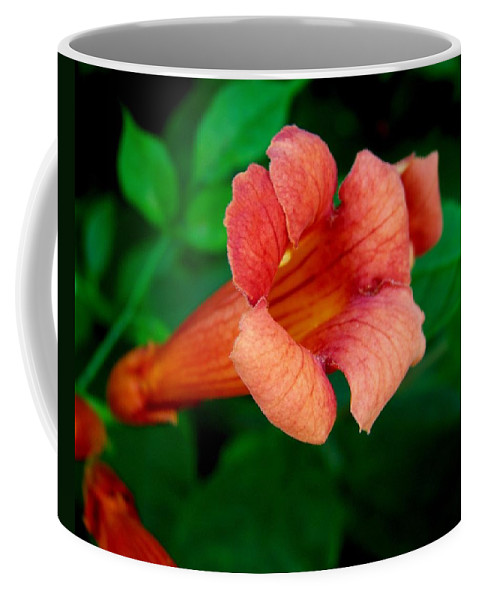 Flower Coffee Mug featuring the photograph Evolution Of The Trumpet Flower II by Jai Johnson