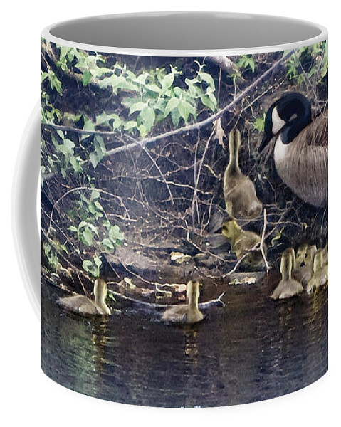 Baby Geese Coffee Mug featuring the photograph Exit by Barbara Hymer