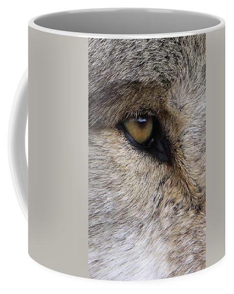 Wolf Coffee Mug featuring the photograph Eye Catcher by Shari Jardina