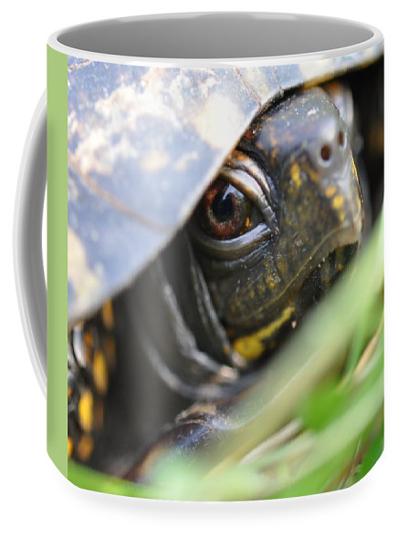 Turtle Coffee Mug featuring the photograph Eye Of The Beholder by Joan Kerns