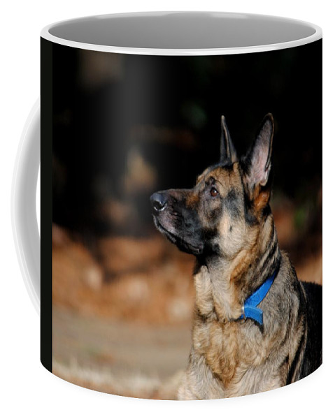 Dog Coffee Mug featuring the photograph Eye On The Ball by Jai Johnson